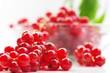 Rote Johannisbeeren Ribes rubrum