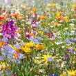 obraz - Fleur de printemps...