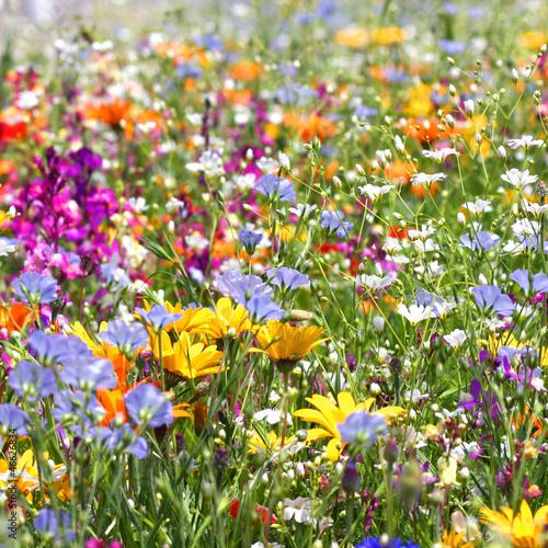 Fleur de printemps au soleil