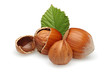 Hazelnuts Group
