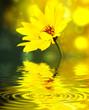 Leinwanddruck Bild - flower