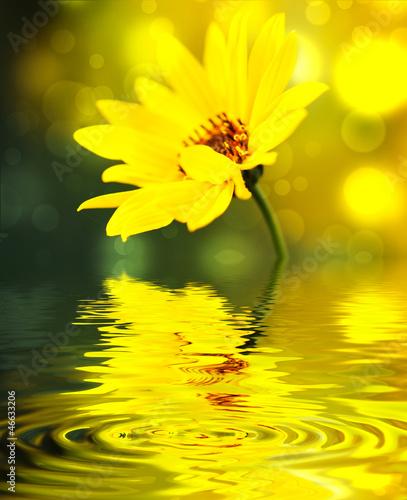 Leinwanddruck Bild flower