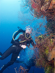 diver and corrals