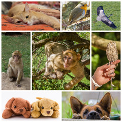Composition de photos d'animaux