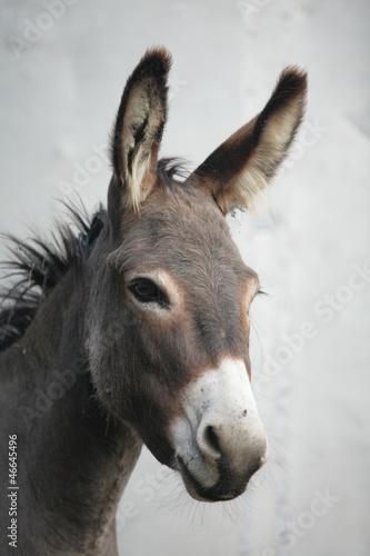 Aluminium Ezel Donkey