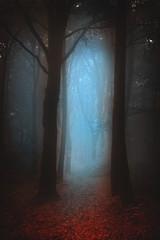 Dark moody forest - a foggy morning