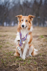 Happy proud dog has many medals
