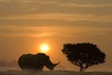 Fototapete Afrika - Wachsam - Säugetiere
