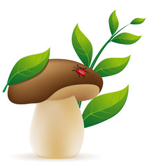 mushroom cep vector illustration