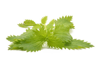 Detail nettle leaves