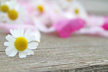 Kamillenblüte auf Holz