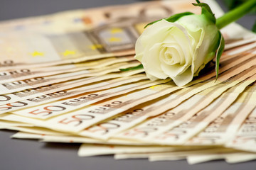 50 euro bills with white rose on top