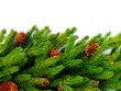Christmas Tree with Cones border isolated on a White