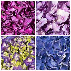 collage di ortensie colorate texture