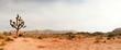 Leinwanddruck Bild - Joshua Tree National Park, USA. Panoramic shot.