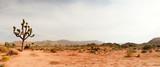 Joshua Tree National Park, USA. Panoramic shot. - 46675092