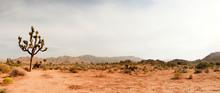 "Постер, картина, фотообои ""Joshua Tree National Park, USA. Panoramic shot."""