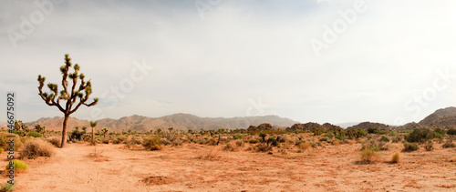 Joshua Tree National Park, USA. Panoramic shot. - 46675092