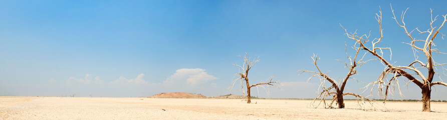 Panorama landscape of dead trees in dry landscape. USA.