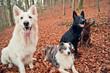 Vier gut erzogene Hunde im Wald