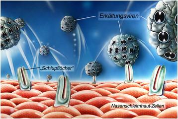Schnupfen.Herbstgrippe.Viren