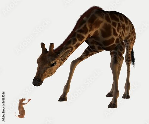 souris et girafe