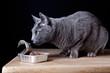 Katze beim Fressen
