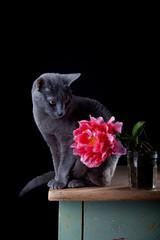 Katze mit Tulpe