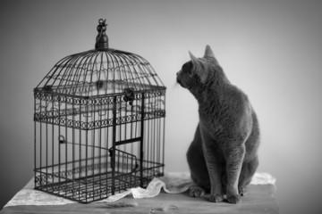 Katze und Vogelkäfig