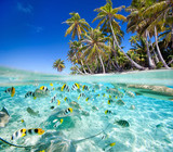Fototapety Tropical island above and underwater