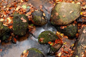 Kleiner klarer Bach im Herbst