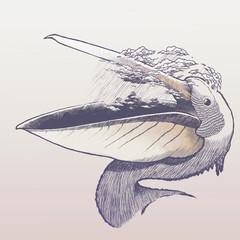 Rainy pelican