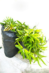 green leaf in garbage bag