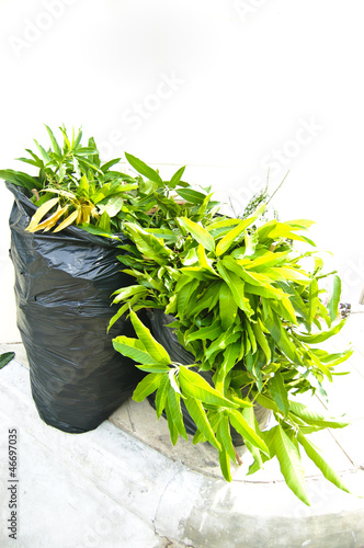 green leaf in garbage bag