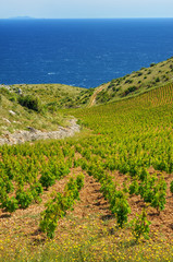 Vineyards, southern coast of Hvar island, Croatia
