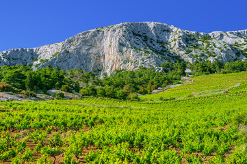 Vineyards,southern coast of Hvar island,Sveta Nedjelja,Croatia