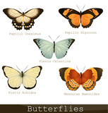 Collection of beautiful butterflies