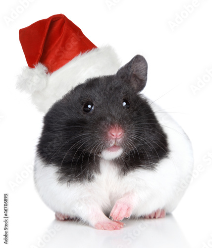 Hamster in Christmas hat on a white background