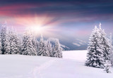 Fototapety Beautiful winter landscape in the mountains. Sunrise