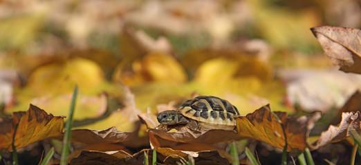 Turtle on leaves