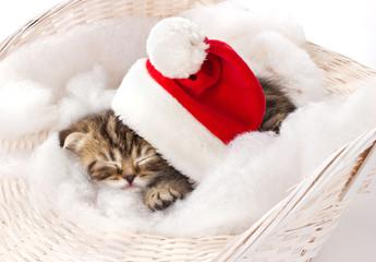 furry kitten sleeping on christmas