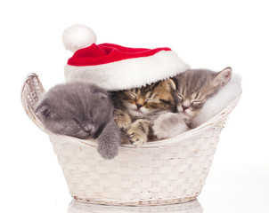 Three cats sleeping on christmas
