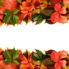 Fall - autumn leaves on a white background like borders
