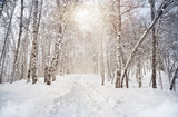 Fototapety Winter birchwood