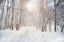 Inverno betulla