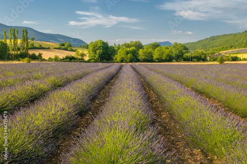 Fototapeten,lavendel,feld,blau,himmel