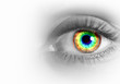 Human eye on grey background