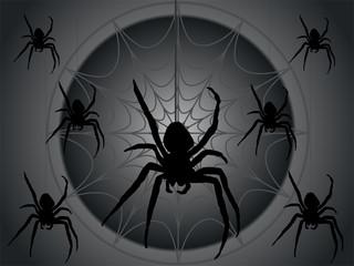 Schwarze Kreuzspinnen im Netz