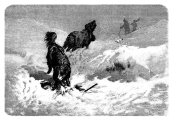 Rescue Dogs - Chiens d'avalanche - Saint Bernard