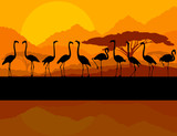 Fototapety Flamingo vector background and sunset